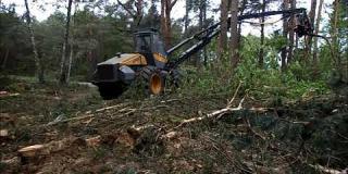 Embedded thumbnail for 23.04.2018 - 02.05.2018 - wycinka drzew w km. 6+200 - 6+600